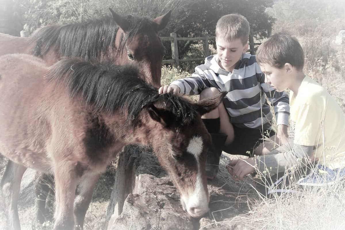 djeca-na-farmi